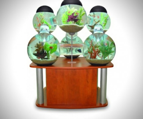 Tolles labyrinth aquarium for Labyrinth fish tank