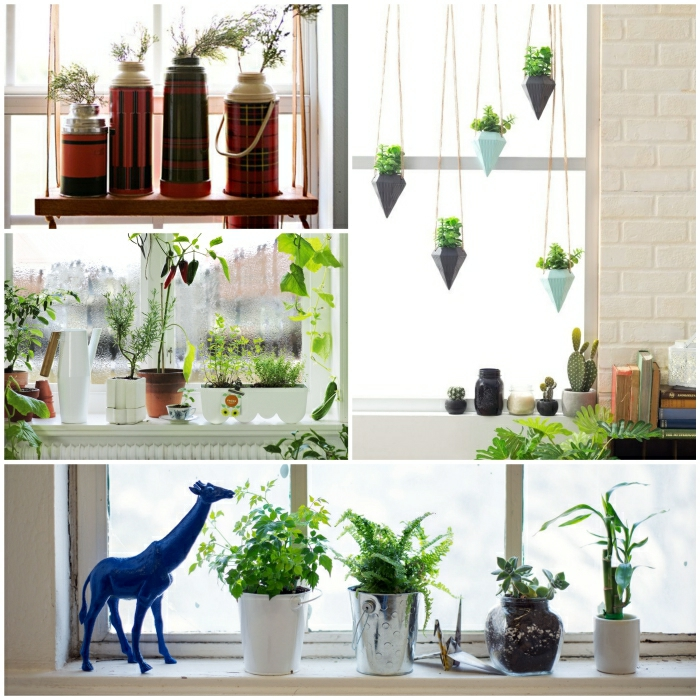 Kitchen Cabinet Plants