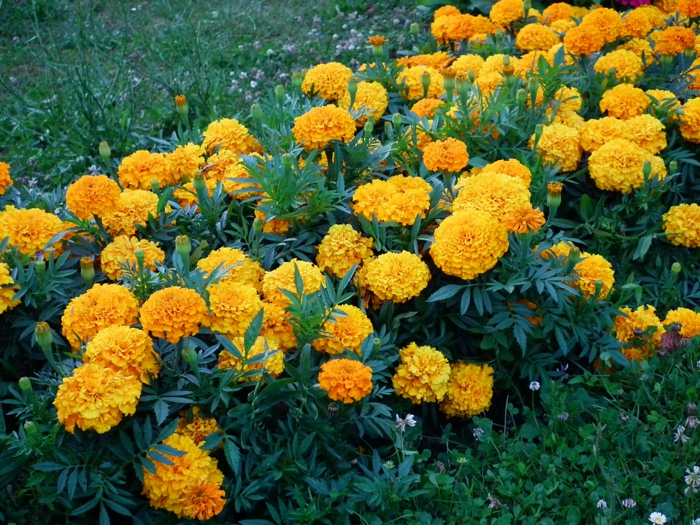 Best Flower Bed Bushes