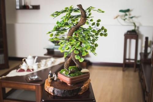 bonsai baum coole ideen